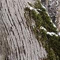 森のさんぽ  DSC02438