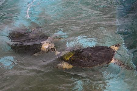 名古屋港水族館110624-カメ-09