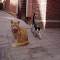 Photos: Marrakech no Neko