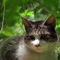 Photos: おすまし猫