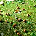 31 秋は園内でどんぐりも08年10月12日撮影 by ホテルグリーンプラザ軽井沢