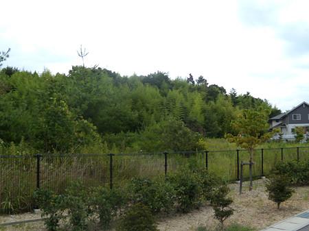 本庄新団地北の森