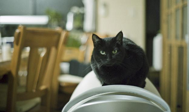 ジョーバー猫