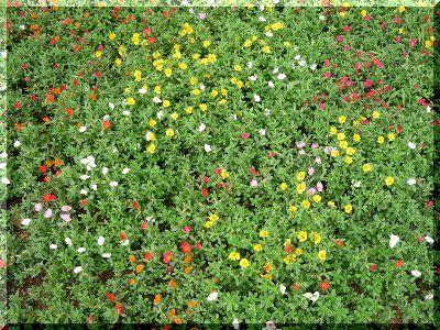 20080809花壇の中の世界01