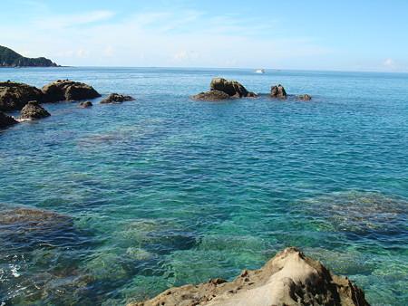 珊瑚とかあるらしいよ@竜串海岸