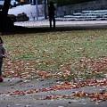 写真: 落ち葉と可愛い女の子 (#^.^#)