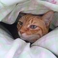 Photos: ネコ様、あんまり寒いので布...