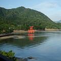 Photos: 錦水館からの景色(厳島神社の鳥居)