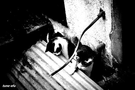 街猫38-おまけ2