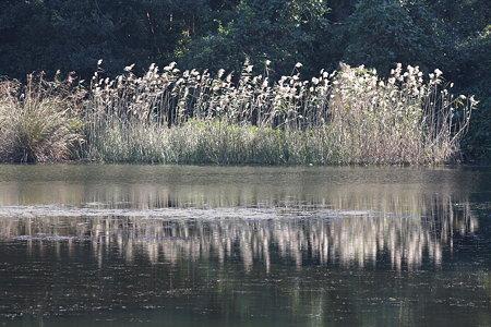 静かな水面