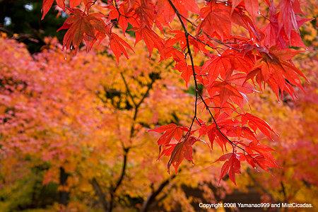 紅葉風景 2008_2