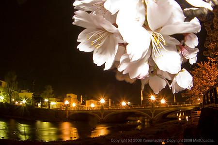 浅野川大橋とソメイヨシノ その2