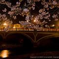 Photos: 浅野川大橋とソメイヨシノ その1