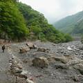 Photos: 弁天堂へ続く道