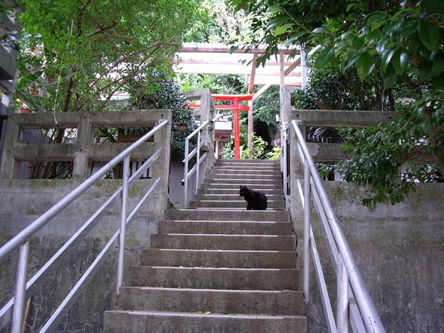 Photos: 猫@沖縄