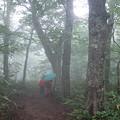Photos: 05一群平ぶなの森