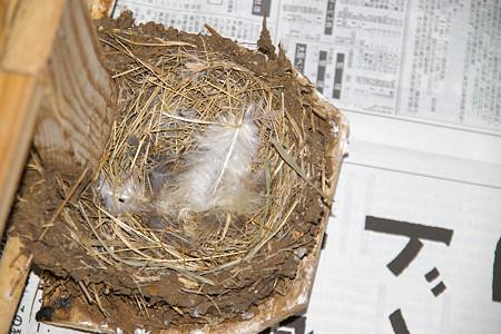 空になった巣