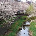 Photos: 『チシマ桜』DSC00124