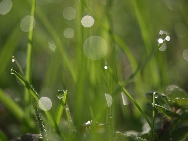 Photos: 光溢れる朝・・・