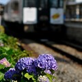 Photos: あじさい列車3