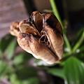 Photos: 百合の種
