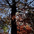 大木のシルエット