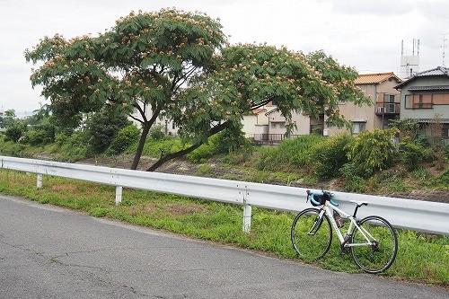 Photos: ねむの木。