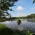 小さな沼の風景-4