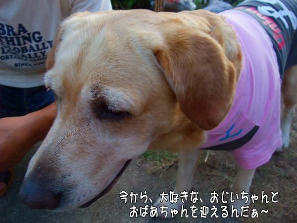 s-2008_0813myu0119