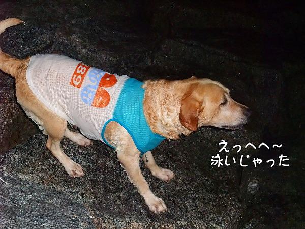 s-2008_0816myu0029