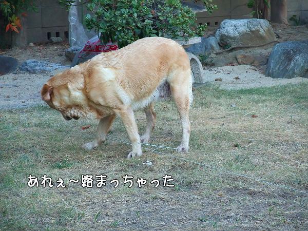 s-2008_0817myu0028