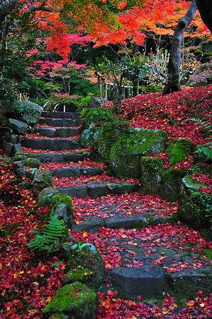 紅葉の階段。