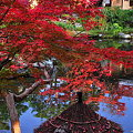 Photos: 081122依水園紅葉1
