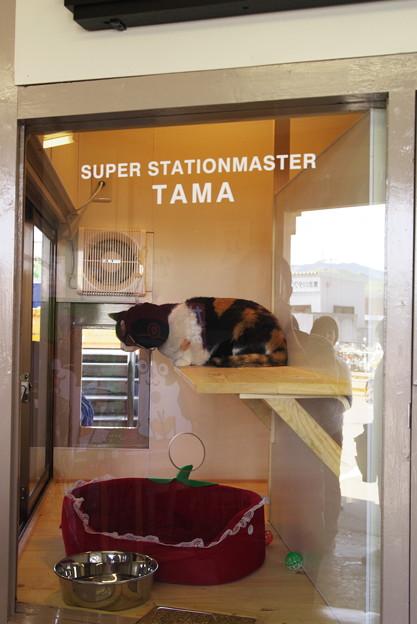 たまスーパー駅長008