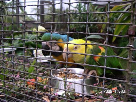 ヒロ動物園4