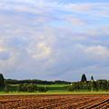 田舎の畑~