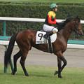 写真: アポロドーロス 返し馬