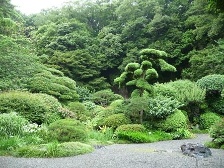 110627-報国寺 庭園 (5)