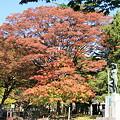 平和公園・紅葉と銅像02-11.10.20