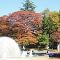 平和公園・紅葉と噴水01-11.10.20