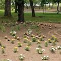 合浦公園・花々04-12.07.04