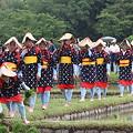 写真: 後楽園お田植え祭り5
