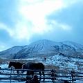 写真: 雪の阿蘇山