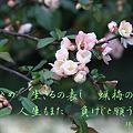 詩歌:2蝋梅の花