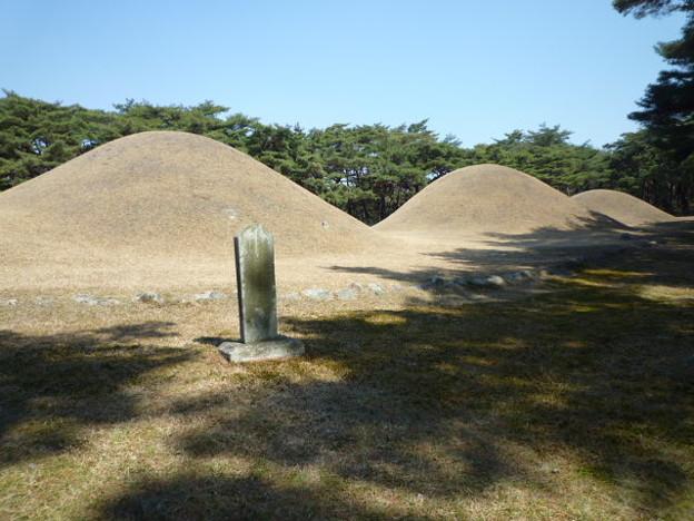 木漏れ日揺れる三陵Three Royal Tombs of the Silla Dynasty *陵(みささぎ)の裾に若草の萌えいづる春浅き慶州(キョンジュ)にあてもなく来つ