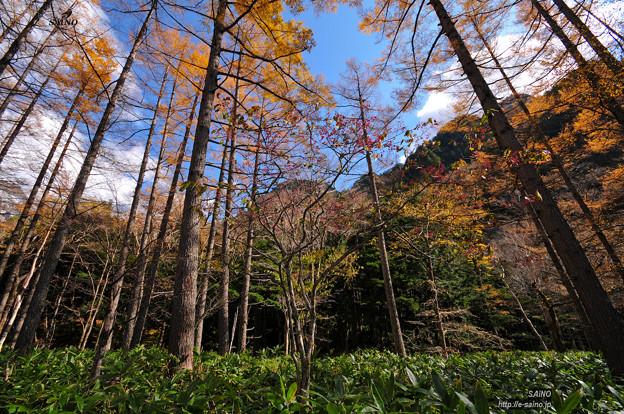 写真: 森の空