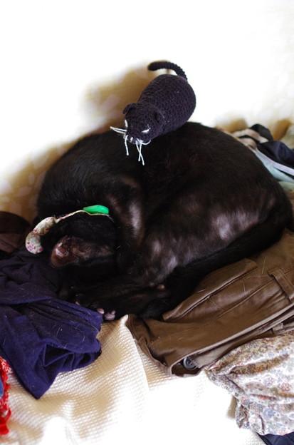 写真: ノエルと俵猫
