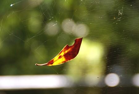蜘蛛の糸のハンモック・・