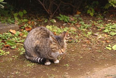 谷中の猫さん・・2
