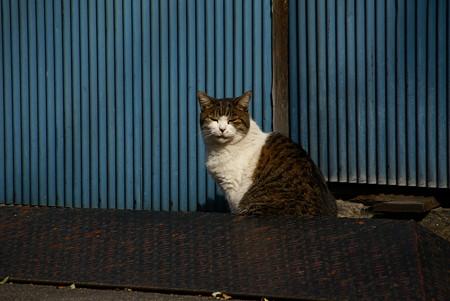 谷中の猫さん・・3